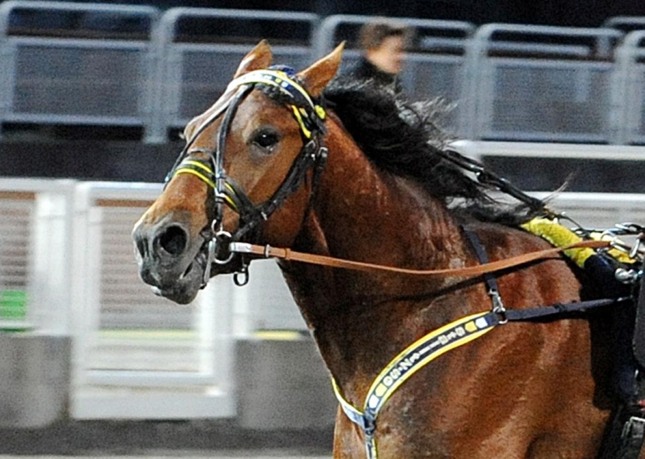 Digital Control var en vinnare i Frankrike idag. Foto: Adam Ström/stalltz.se