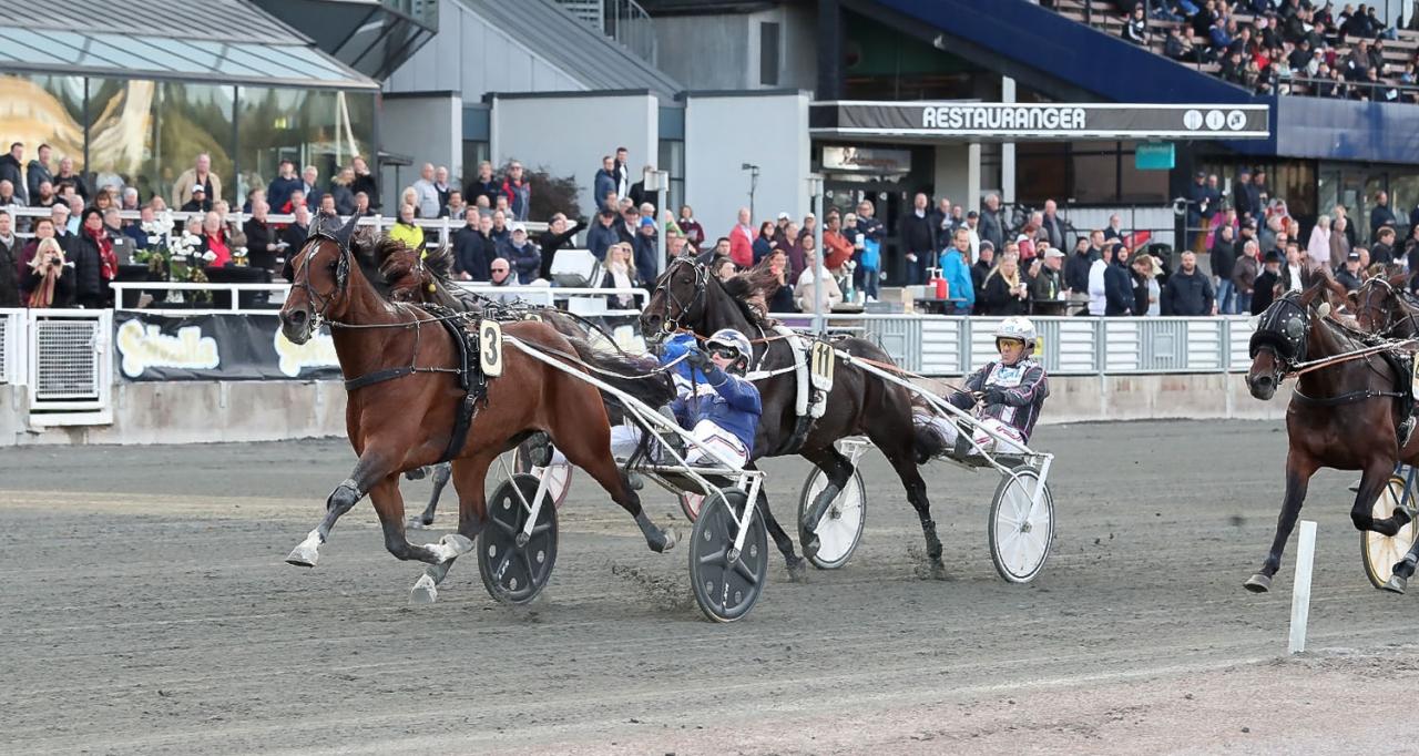 Heavy Sound svarade för ett mycket starkt slutvarv för Kenneth Haugstad. Foto Jeannie Karlsson/Sulkysport