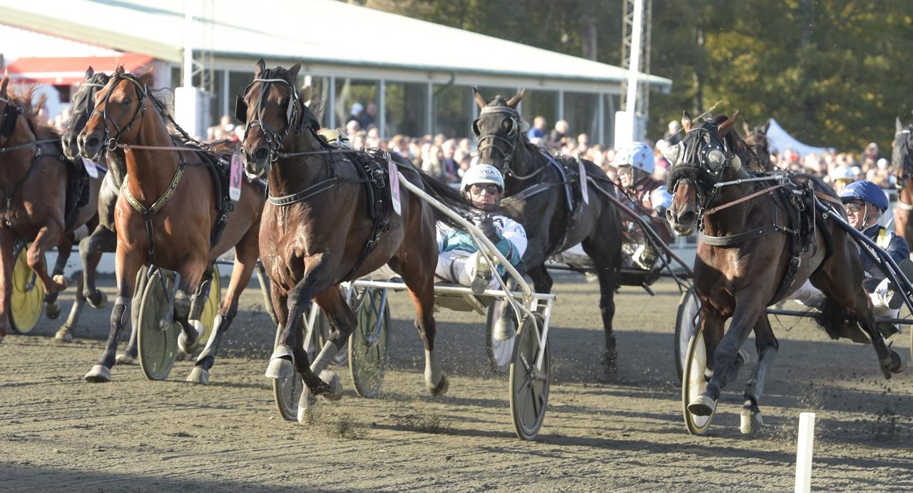 Propulsion avgjorde en rafflande Trotting Masters-final från dödens tillsammans med Örjan Kihlström. Foto Leif Norberg/ALN