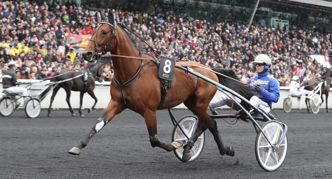 Readly Express och Björn Goop är en av 14 hästar som går ut i Prix de Belgique på söndag. Foto: Mia Törnberg/Sulkysport