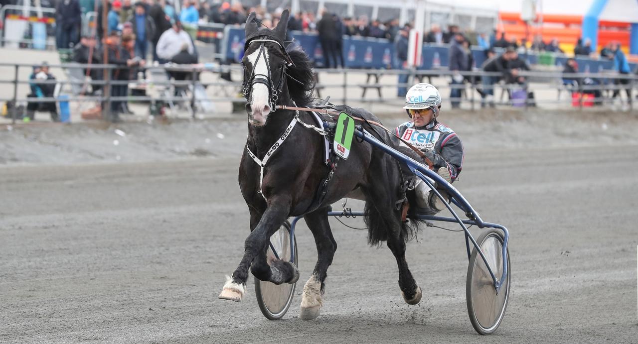 Unionskampen med 300.000 kronor i förstapris har samlat ett härligt kallblodsgäng med bland annat Tekno Odin. Foto Jeannie Karlsson