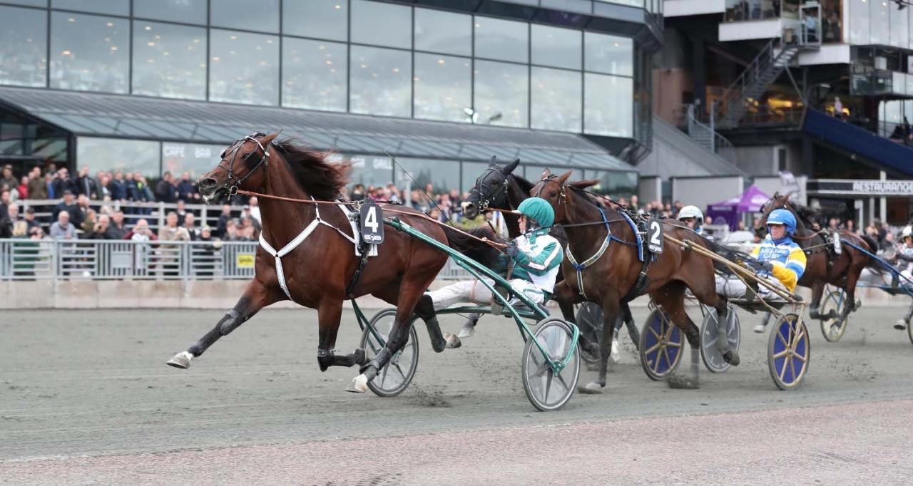 Who's Who jagar sin andra Derbytitel nästa fredag på Vincennes där Europaderbyt avgörs. Foto Jeannie Karlsson/Sulkysport