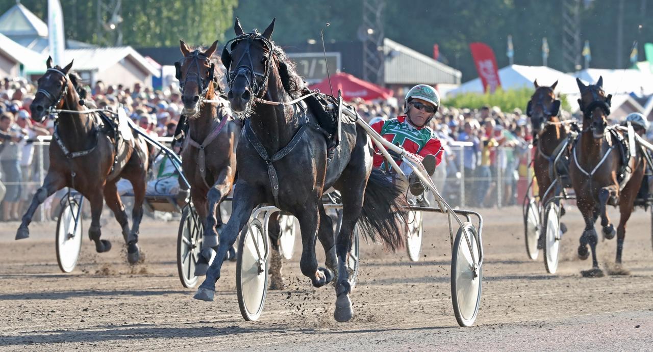Steen Juuls segermaskin Bandit Brick (36 st: 30-2-2) blev i senaste starten diskvalificerad för galopp! På onsdag startar han  i ett stayerlopp på Jägersro. Foto Mia Törnberg