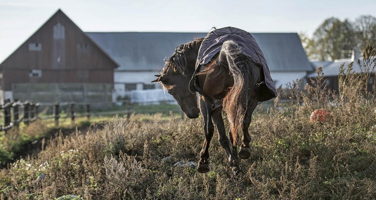 Belker busar i sin hage på Gotland. Foto Lasse Oloffson/Bellux