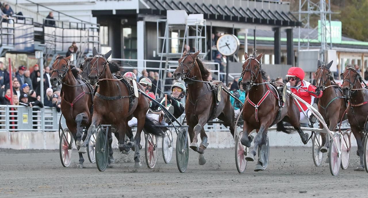 Axevalla bjuder på högklassiga tävlingar på tisdag med Breeders Crown. Bland annat startar Kriterievinnaren Inti Boko.  Foto Jeannie Karlsson
