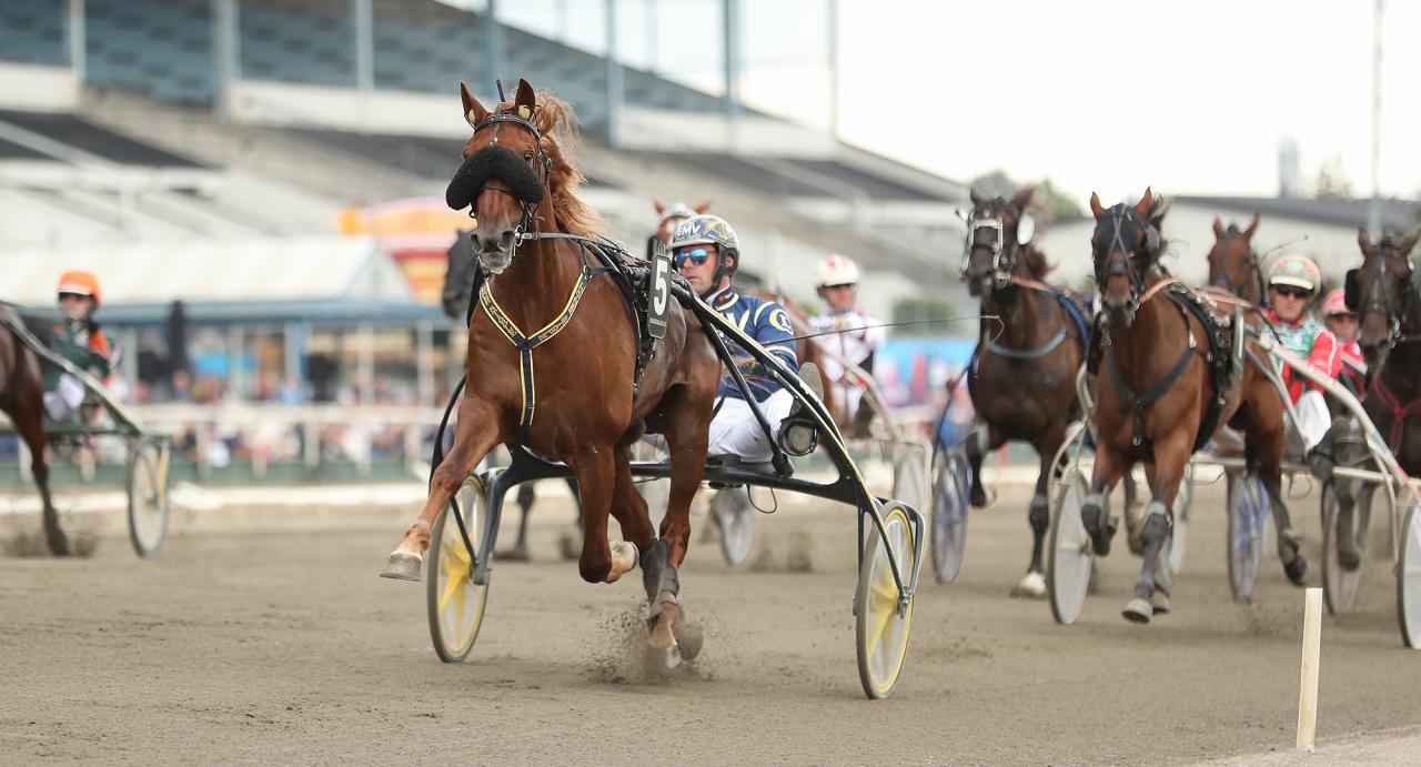 Nolimitjimmit har två segrar och ett andrapris efter fem lopp hos Conrad Lugauer. Foto Jeannie Karlsson/Sulkysport