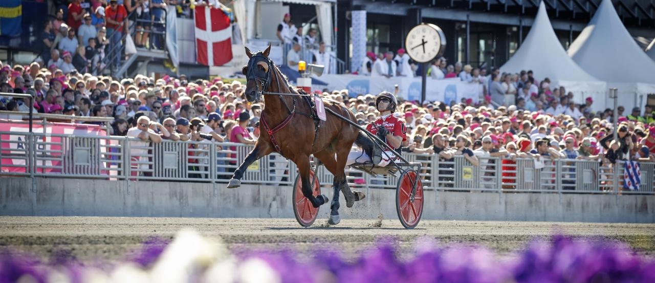 """Pastore Bob är en av hästarna som står i """"detention barn"""" inför VM-loppet och också en av de som veterinären har hjälpt inför kvällens start. Foto Mia Törnberg"""