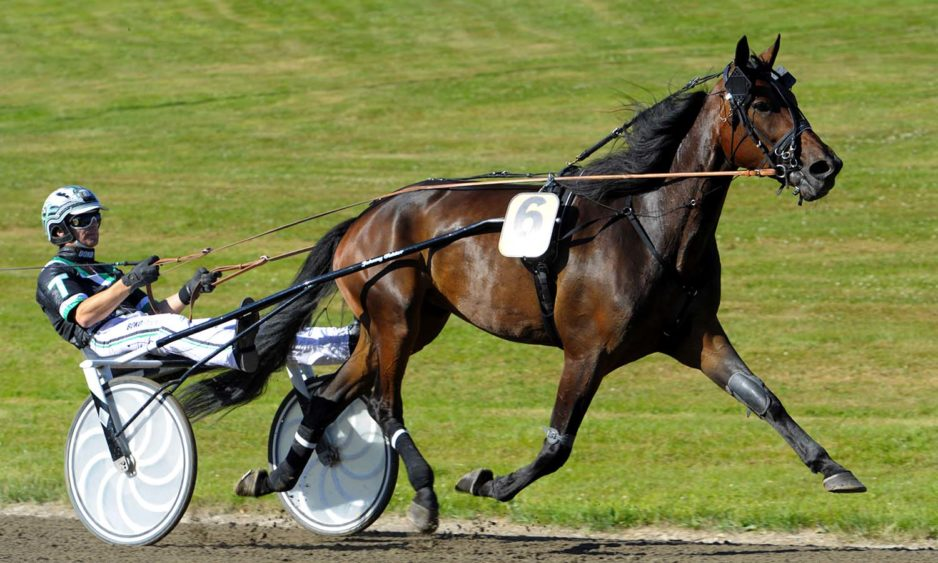 Fascination med Johnny Takter, Sulkysport, Travsport