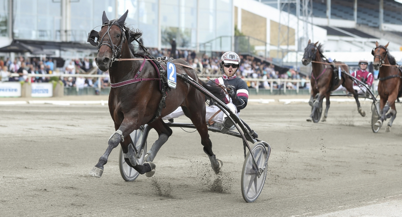 Ultion Face segrade i Breeders Course Derby Day Race och såg länge ut som en vinnare i Svampen senast. På tisdag ska han försöka kvala in till Svensk Uppfödningslöpning. Foto Jeannie Karlsson