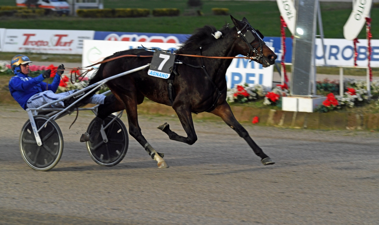 Björn Goop vann Gran Premio Mipaaft Filly (€88.000) med Erik Bondo-tränade All Wise As. Foto: Gerard Forni