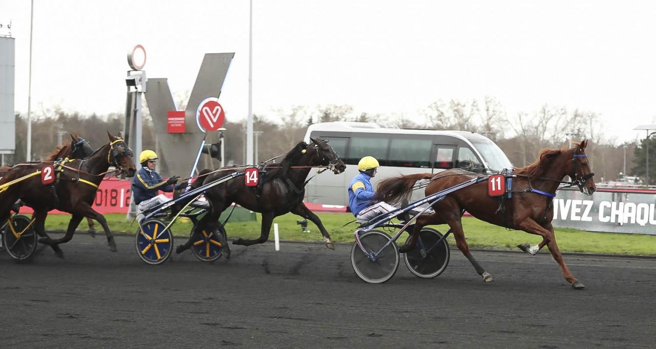 Tvåa i mål, men överst i Prix de Belgique. Bird Parker tog andra raka i loppet sedan Belina Josselyn diskvalificerats. Foto Jeannie Karlsson/Sulkysport