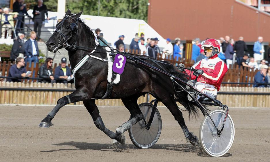 Husnäs Elving med Jan Norberg, travhäst, Travsport, Sulkysport
