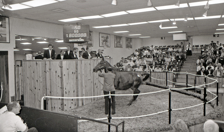 Winky's Gill i auktionsringen 1986. Foto: Stefan Melander/Stalltz.se