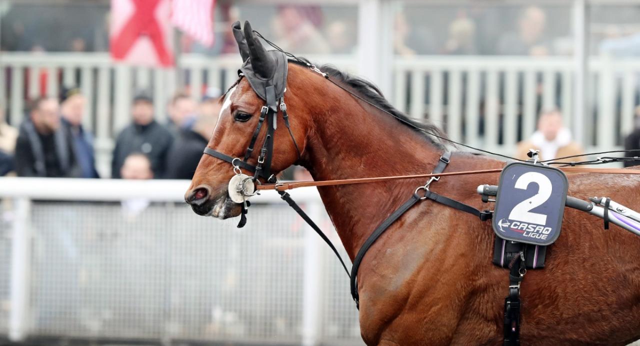 Charly du Noyer är en av hästarna som kan vara aktuell för en Elitloppsbiljett – om han vinner Finlandia Ajo! Foto Mia Törnberg