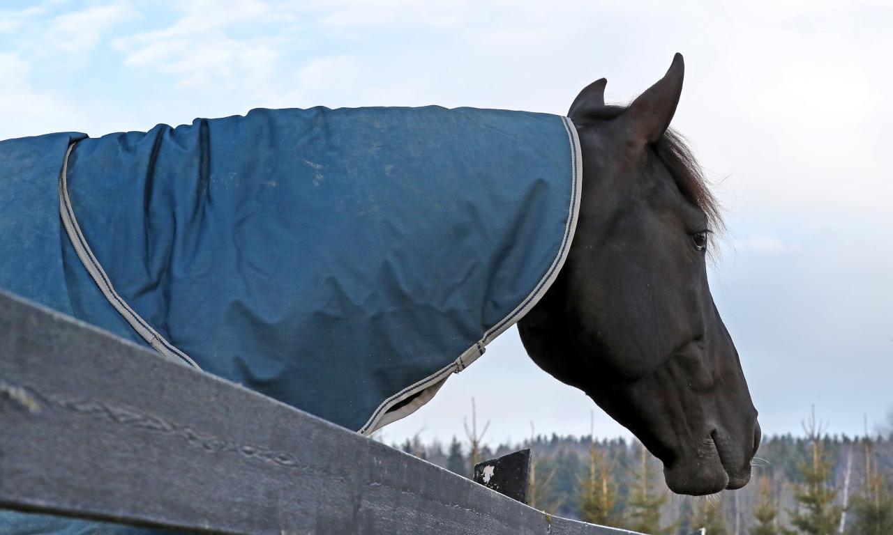 Nuncio har gjort sin sista start, har det nu bestämts. Foto: Mia Törnberg.