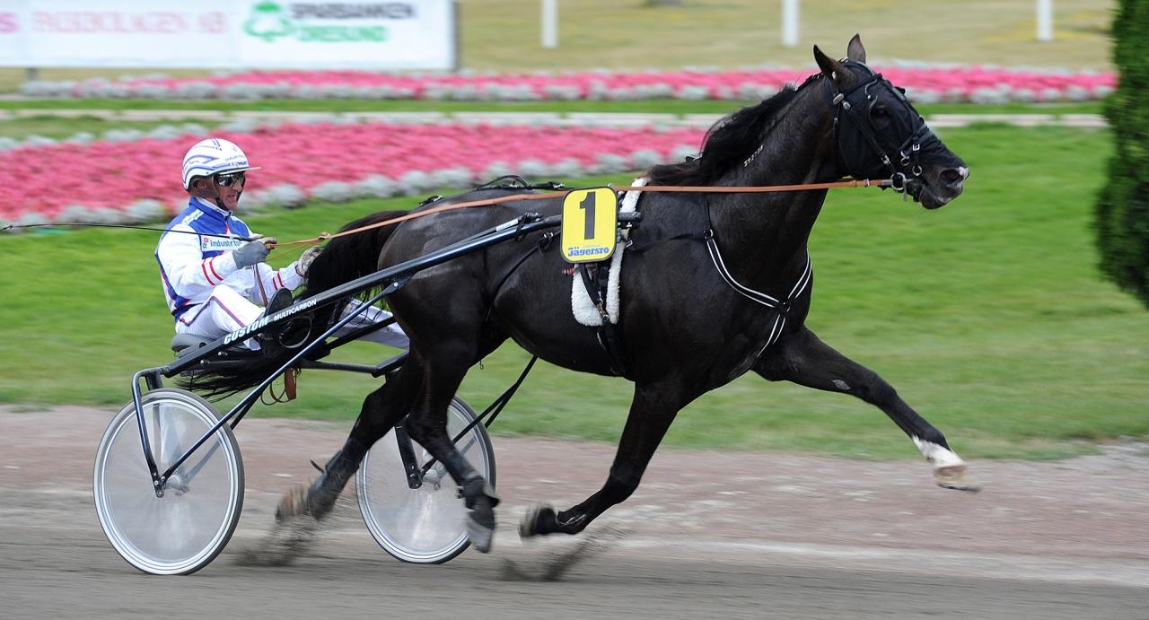 Peter Ingves körde Pato vid segrarna i storloppen. Foto: Jörgen Tufvesson/ALN