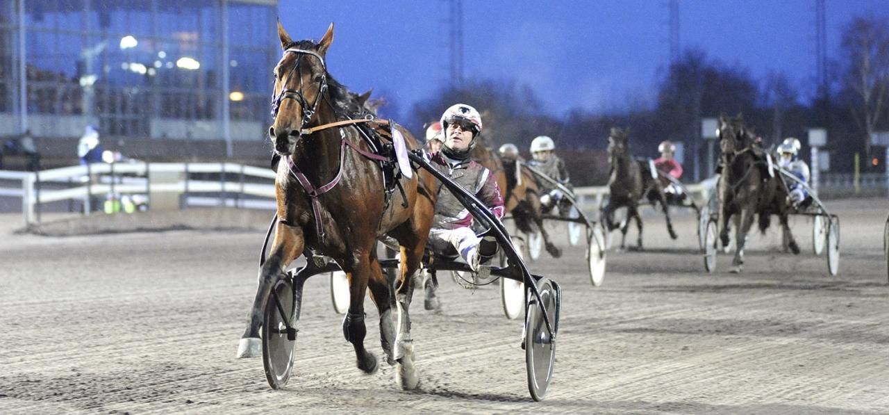 Ulisse Kronos har en stamtavla med många framgångsrika syskon. Foto Jörgen Tufvesson/ALN