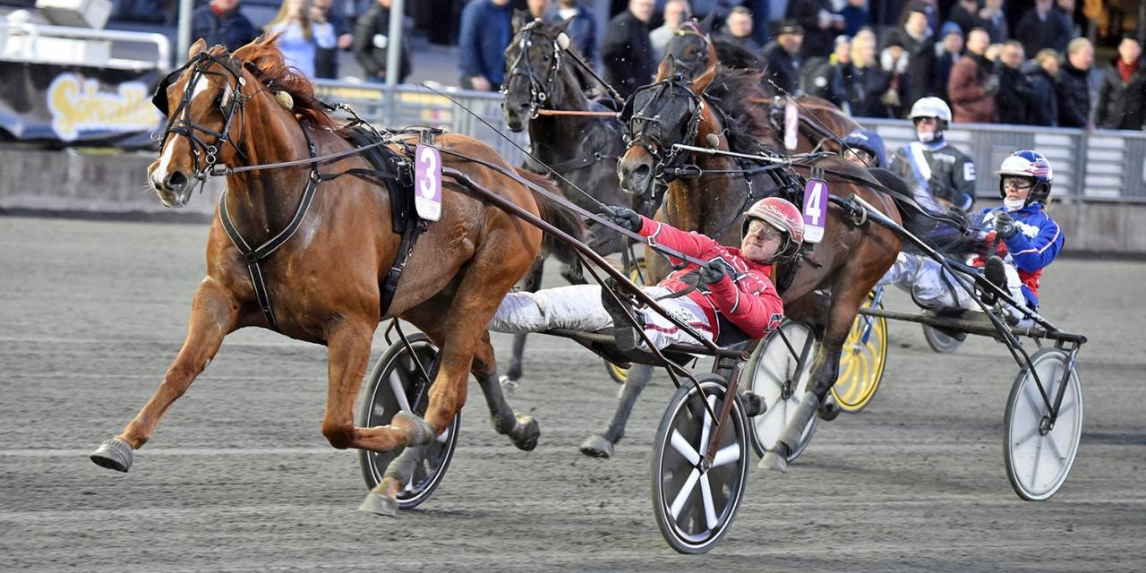 Västerbo Highflyer tillhör den kategori hästar som kan komma att starta i Solvallas nyinstiftade fuxlopp. Foto: Martin Langels/ALN