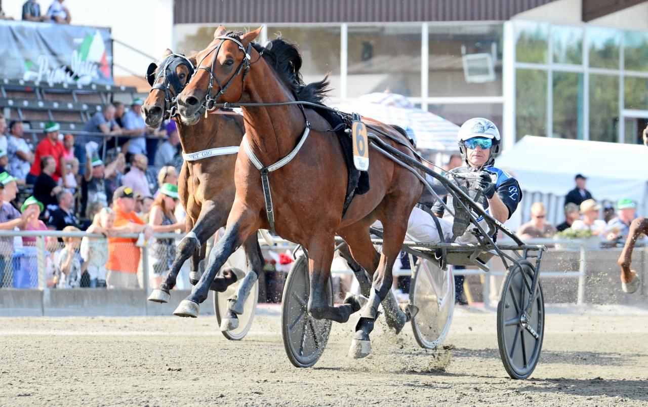 Ifjol vann Hazard Boko bland annat Slaget vid Axevalla Hed. Ikväll gör Per Lennartssons häst årsdebut i Margaretas tidiga unghästserie. Foto: MVA Foto