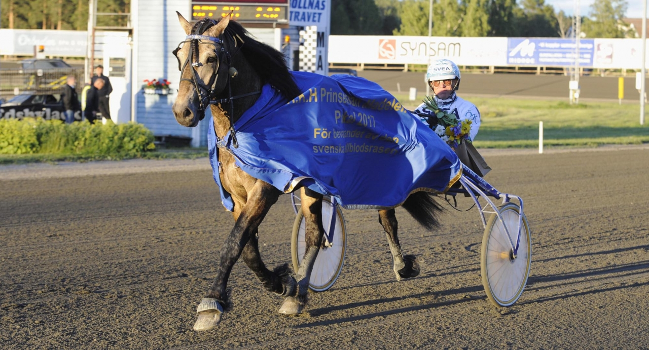 Tangen Scott-sonen Järvsö Pegasus vann kjallblodsderbyt 2017. Foto: Christer Norin/ALN
