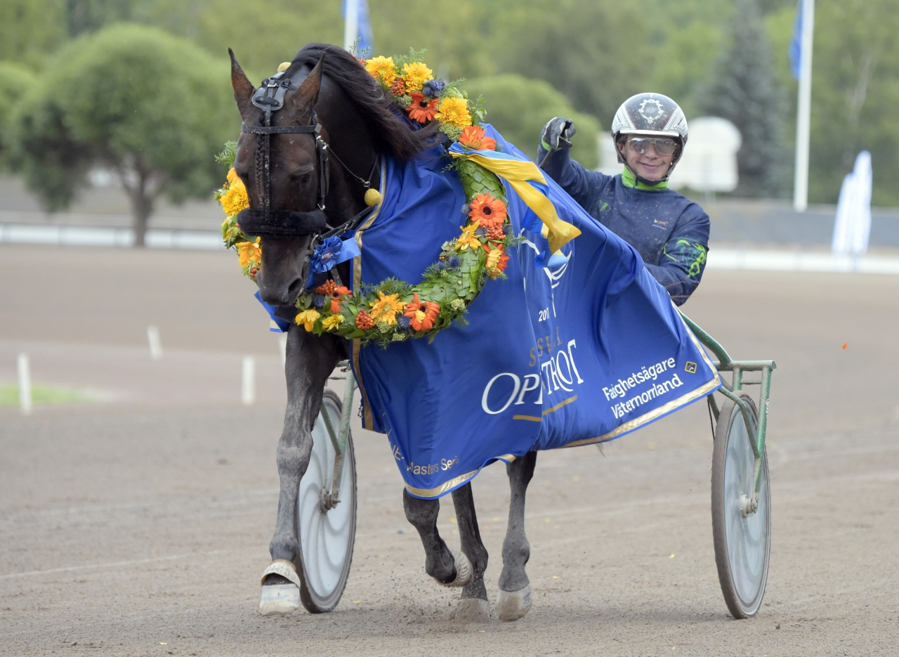 Sundsvall Open Trot-vinnaren Ringostarr Treb ska starta i Nederländerna. Foto Martin Langels/ALN