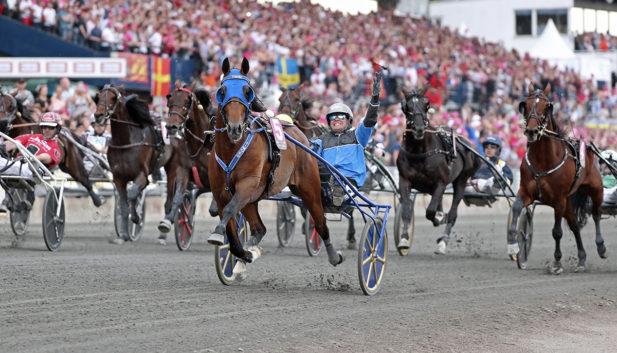 Tack Timoko för en fantastisk karriär! Foto Mia Törnberg/Sulkysport