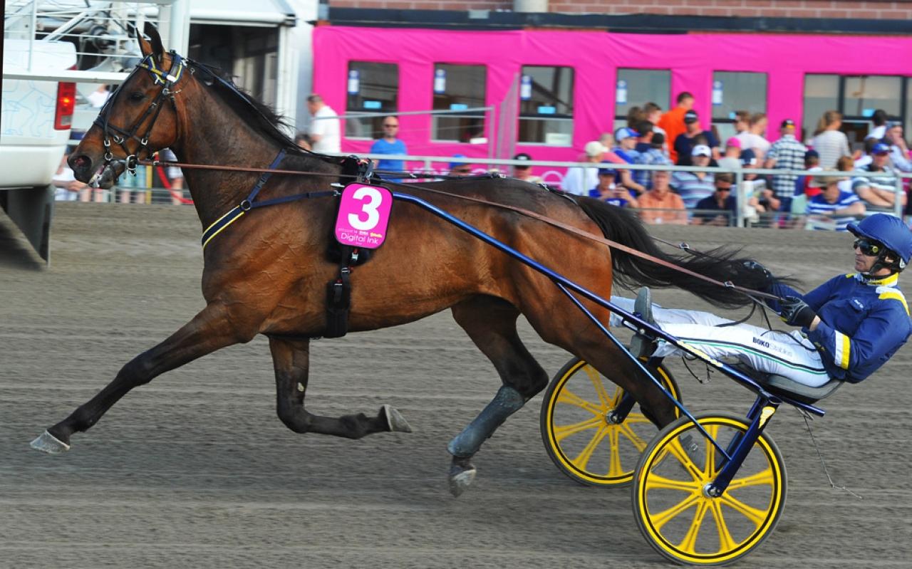 Digital Ink är på väg tillbaka mot tävlingsbanan och nu i ny regi – Robert Bergh. Foto Stalltz.se