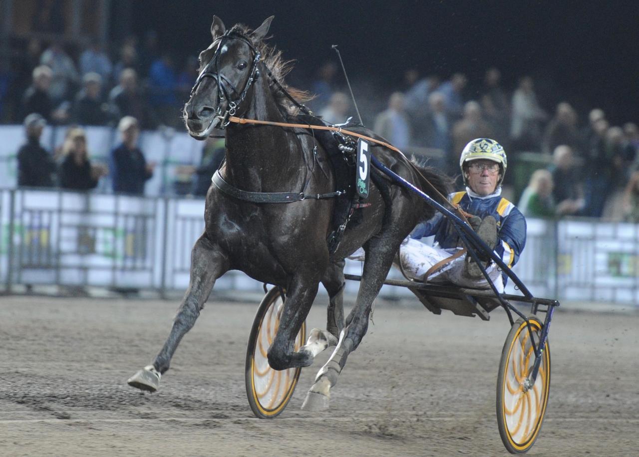 Nuncio slutar tävla och ska stallas upp som avelshingst på Menhammar Stuteri nästa år. Foto: Stalltz.se