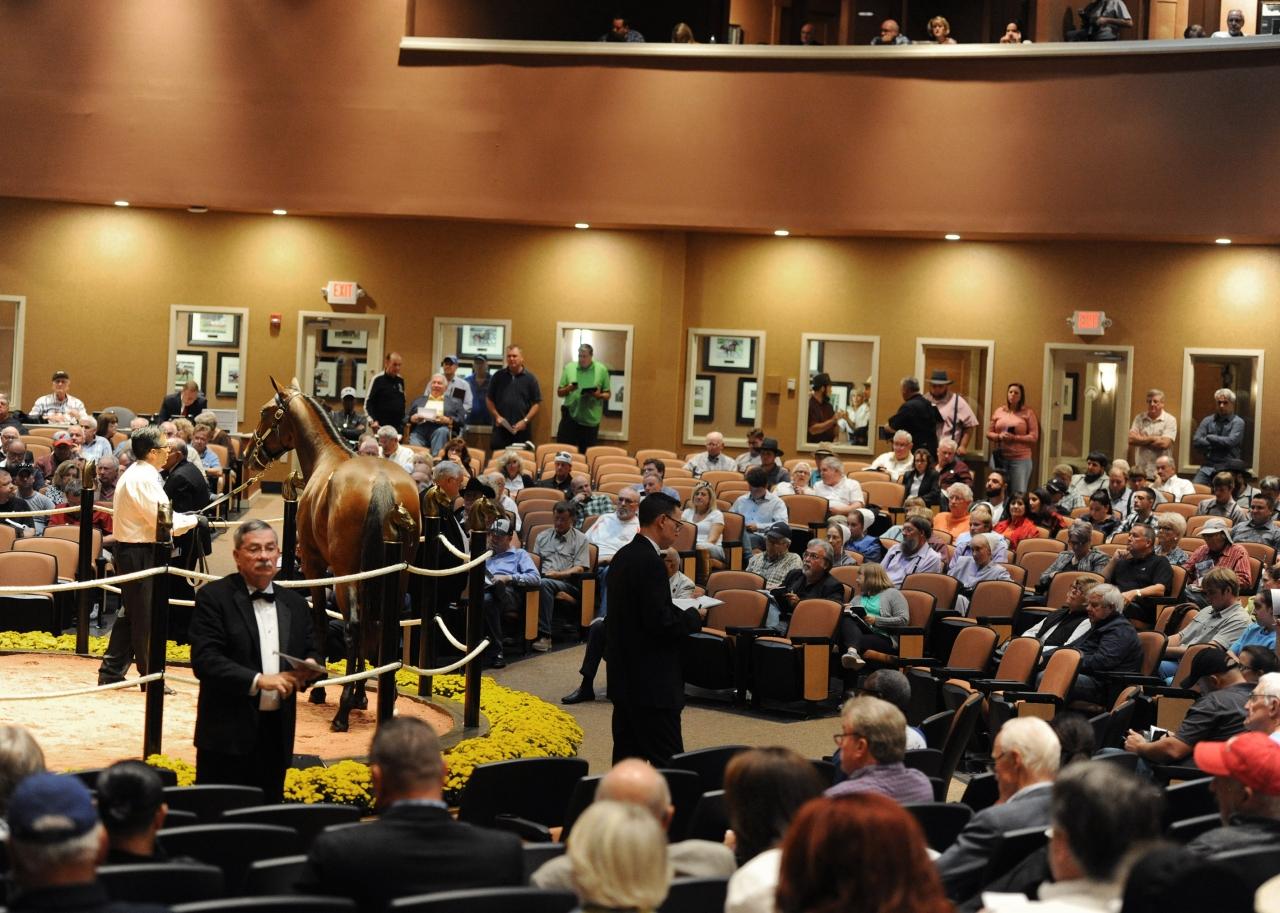 Rekordsiffror i Kentucky. Lexington Selected Yearling Sale hade sin bästa auktion någonsin. Foto Adam Ström/stalltz.se