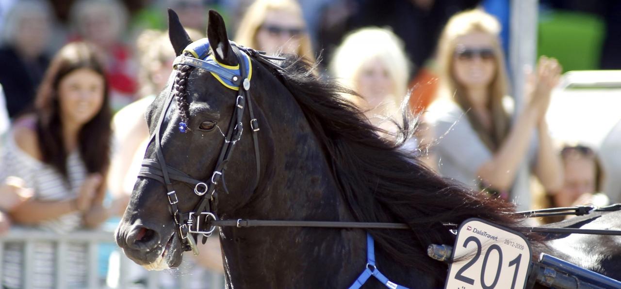Järvsöfaks ledde defileringen till Elitkampen i år. Foto Micke Gustafsson/ALN