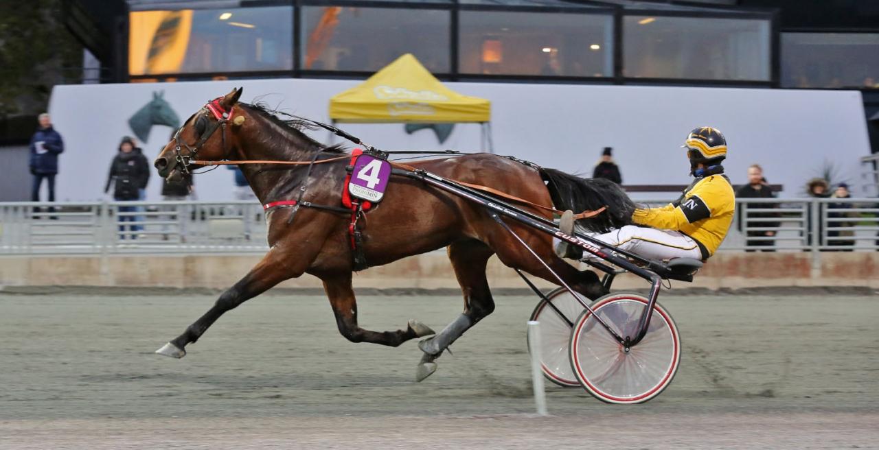 Lucifer Lane har totalt vunnit 14 lopp och tjänat över tre miljoner kronor. Foto Mia Törnberg