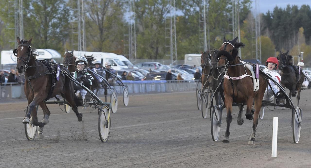 Svampen-vinnaren Maze Runner ska starta i finalen av Sikta mot Stjärnorna. Foto Lars Jakobsson/Kanal75