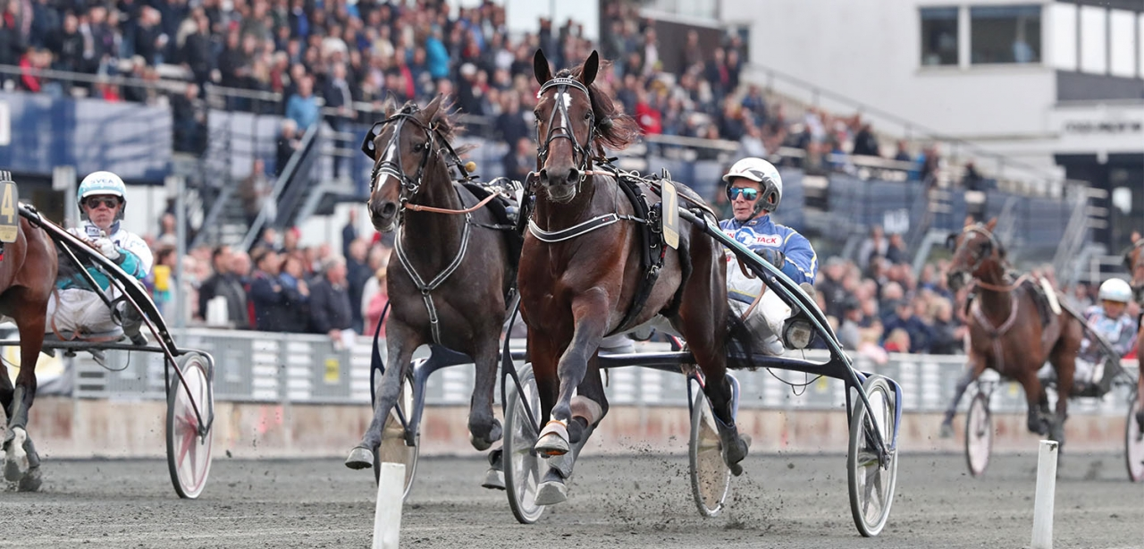 Villiam imponerade stort när han vann Kriteriet på nytt världsrekord. Foto Mia Törnberg/Sulkysport