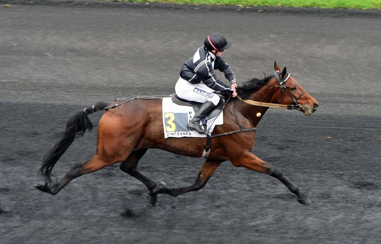 Mindyourvalue W.F. vid en tidigare seger på Vincennes. Foto: Gerard Forni