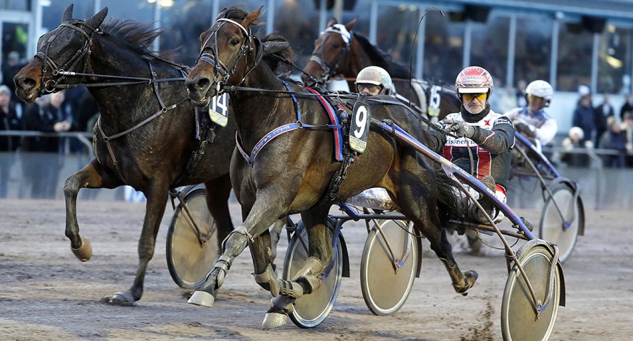Southwind Feji blir årets segerrikaste häst i Sverige då hon igår tog tolfte segern för året. Foto Kanal75