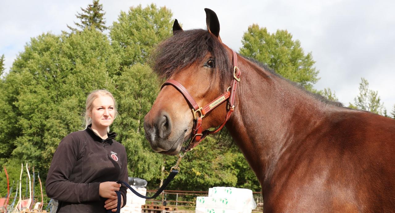 Jan-Olov Persson-tränade Stjärnblomster tog hem Derbystoet i Östersund. Här är hon tillsammans med skötaren Maija Klaar. Foto Mathias Hedlund