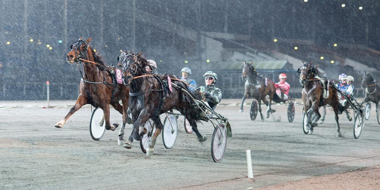 Helena Burmans snabba Ready Cash-dotter Darling Hornline inledde året med seger. Foto Mikael Rosenquist/ALN