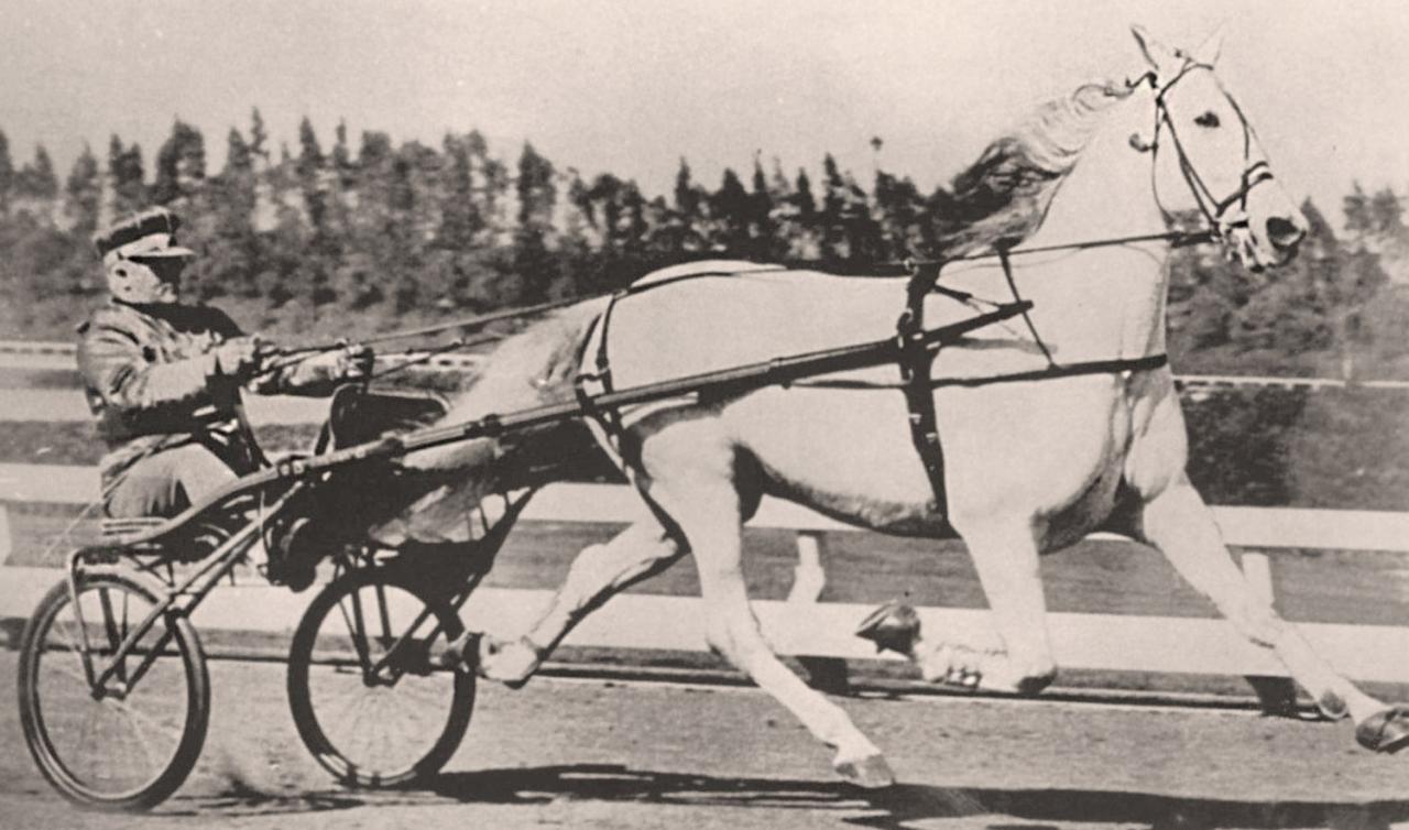 Greyhound är Klaus Kochs val som världens bästa häst genom tiderna.