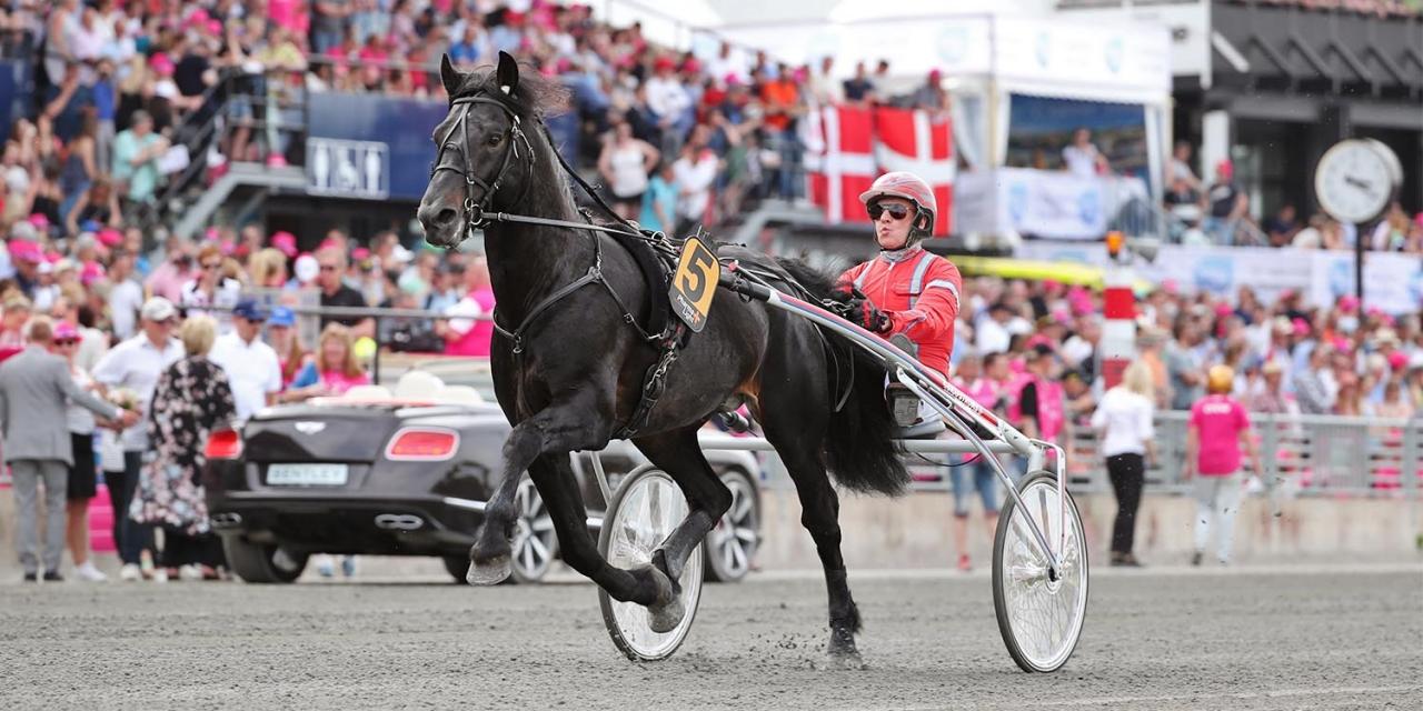 Månprinsen A.M., makt som tävlingshäst men undermålig som avelshingst, enligt den officiella bedömningen av hans avkommor. Foto: Mia Törnberg/Sulkysport