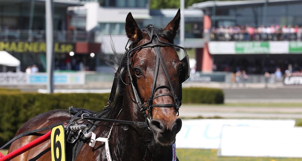 Harry Haythrow åker till Danmark på söndag och tävlar om ett förstapris på 50.000 danska kronor. Foto: Jeannie Karlsson/Sulkysport