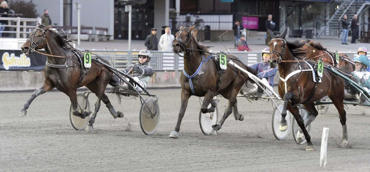 Klaus Koch del äger Gogo di Quattro, som i oktober vann på Solvalla för Mattias Djuse. Foto Leif Norberg/ALN