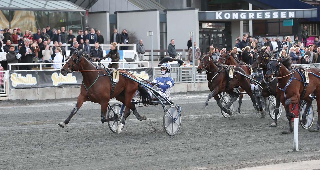Zenit Brick är favorit i högsta klassen. Hästen har segrat i fyra av sex starter på Bergsåker. Foto Jeannie Karlsson/Sulkysport