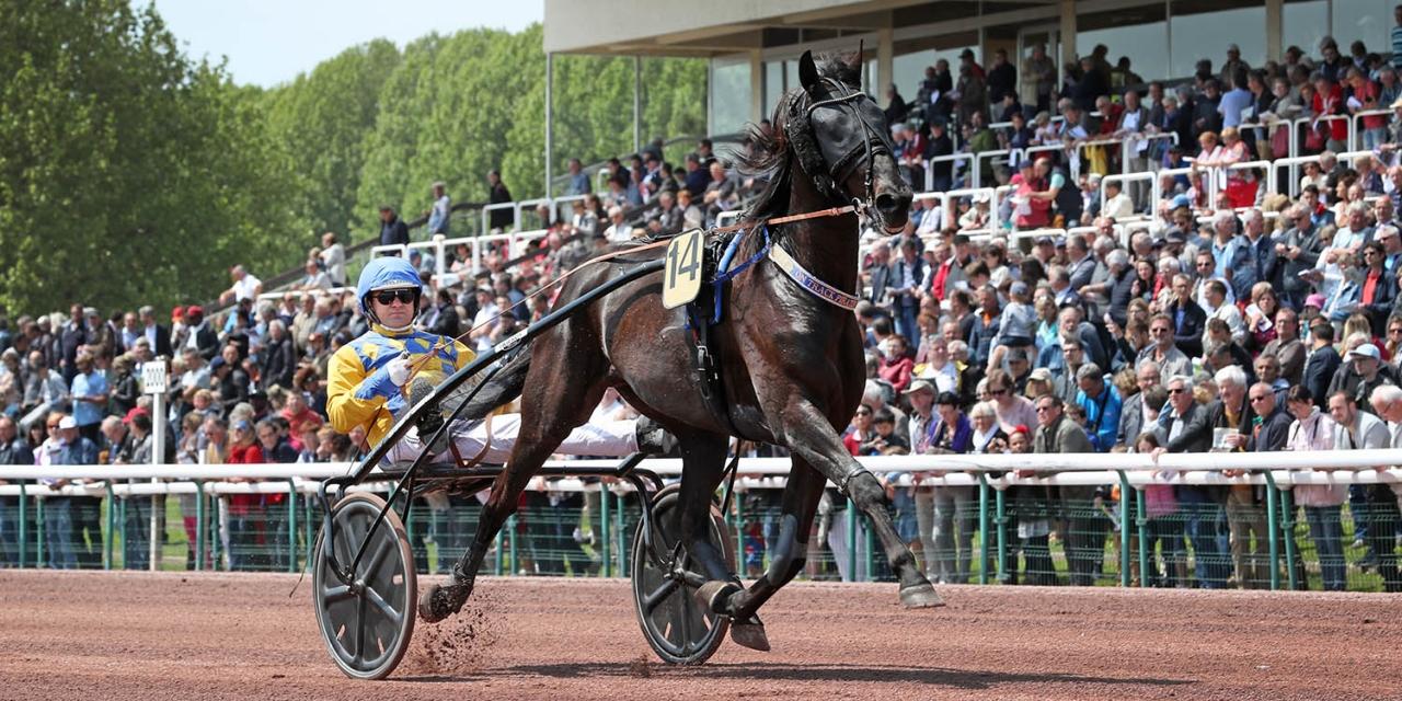 Hans R Strömbergs topphäst On Track Piraten har vunnit 48 lopp och tjänat nästan 18 miljoner kronor. Foto Mia Törnberg