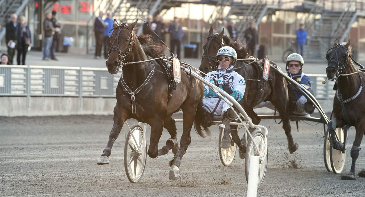 Daniel Redéns Perfect Spirit vann både försök och final i Kungapokalen ifjol. Foto Mia Törnberg/Sulkysport