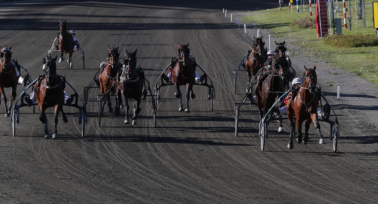 Readly Express kom, sågs och segrade i Jämtlands Stora Pris 2018 där det blev övertygande seger på 1.10,0. Foto Mathias Hedlund