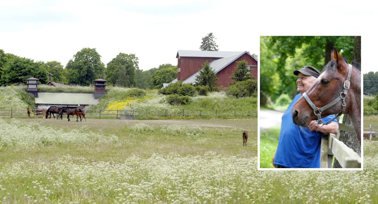 Skråmsta Stuteris Christer Dahling har gått bort, 90 år gammal. Foto Martin Langels/ALN och Skråmsta Stuteri