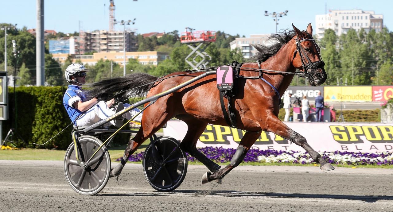 Uza Josselyn blev den sjunde hästen att bli inbjuden till Elitloppet. Foto Jeannie Karlsson/Sulkysport