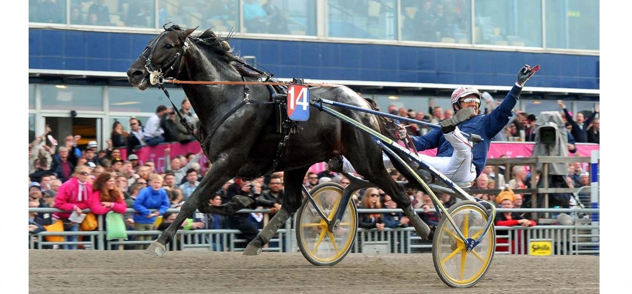 Jos Verbeeck vann Harper Hanovers lopp år 2016 bakom Bird Parker. Även i år kör han köra en fransktränad häst i det stora stayerloppet. Foto Stefan Melander/Stalltz.se