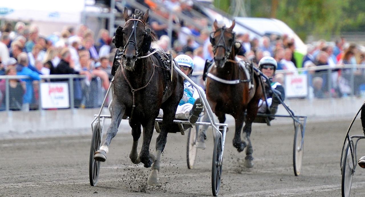Daniel Redéns fransos Canari Match vann på 1.10,2 i Eskilstuna förra sommaren. Hur fort går det i Bollnäsloppet på lördag? Foto Adam Ström/Stalltz.se