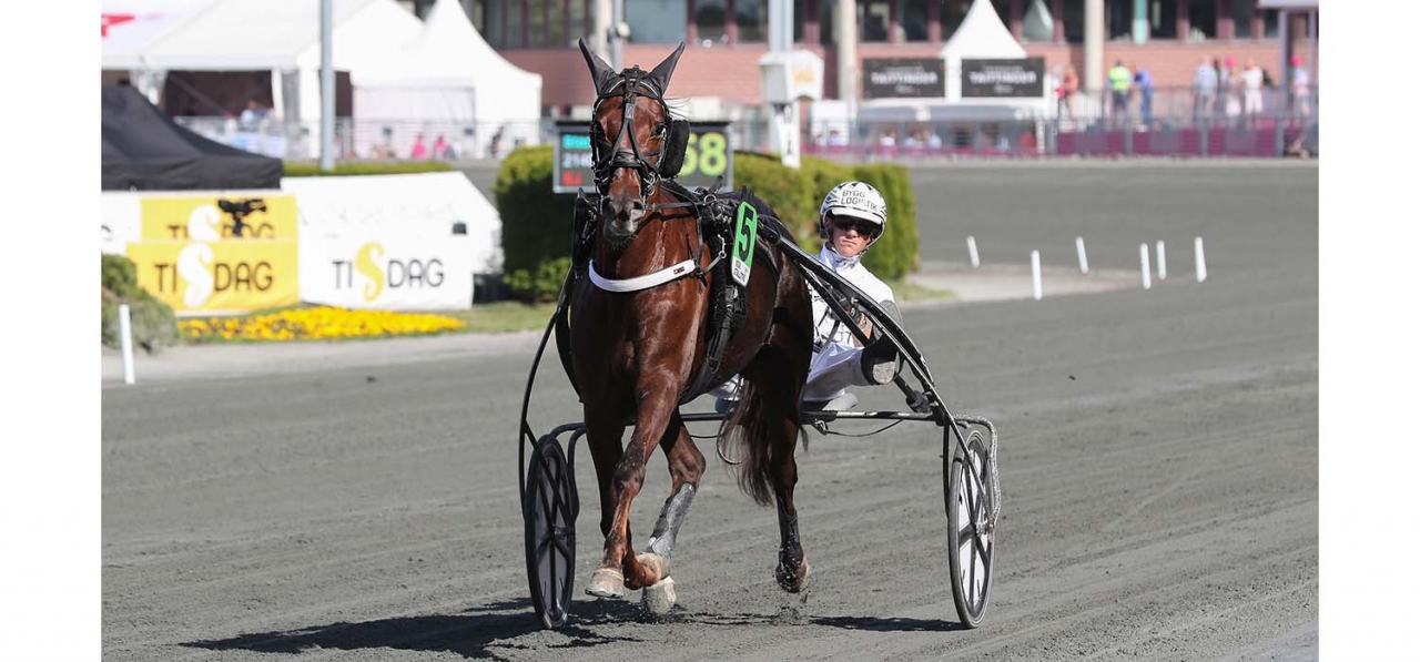 Rose Mary missar Stochampionatet. Foto Jeannie Karlsson/Sulkysport